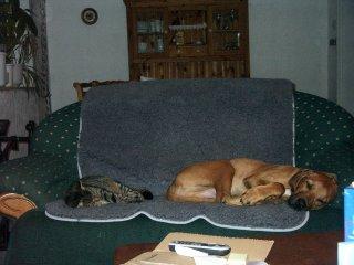 Crispel und Abby auf dem Sofa