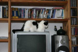 Schnurpsel auf dem Fernseher