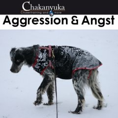 Aggression, Angst
